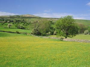 Wild Flower Meadow, Swaledale, Yorkshire Dales National Park, North Yorkshire, England, UK, Europe by Jonathan Hodson