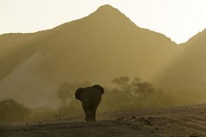 A Desert-Adapted African Elephant, Loxodonta Africana, Walking in a Hazy Landscape of Hills by Jonathan Irish
