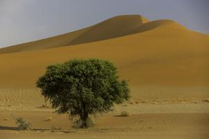 A Landscape of Towering Sand Dunes and a Lone Green Tree by Jonathan Irish