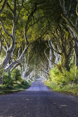 A Treelined Road in Ballymoney, County Antrim, Northern Ireland by Jonathan Irish
