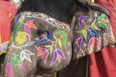 An Asian Elephant Decorated for the Jaipur Elephant Festival by Jonathan Irish