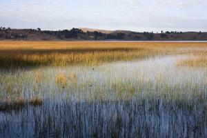 Reeds in Lake Titicaca at Sunrise by Jonathan Irish