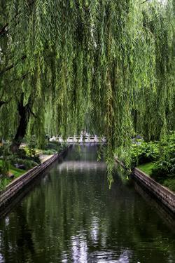 The Branches of a Weeping Willow Tree, Salix Babylonica, Hanging over a Calm Waterway by Jonathan Irish