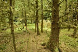 A Boardwalk Trail Through a Moss-Covered Temperate Rainforest by Jonathan Kingston