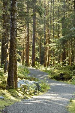 A Gravel Trail Through a Mossy Evergreen Forest Near Juneau, Alaska by Jonathan Kingston