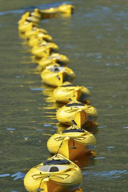 A Line of Yellow Sea Kayaks, Tethered Together, Floating on Green Water by Jonathan Kingston