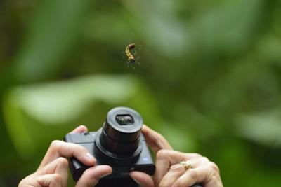 A Tourist Takes a Photograph of a Caterpillar Hanging from a Thread of Silk by Jonathan Kingston