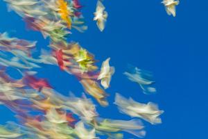 Blurred Streaks of Color and Motion from a Flock of Colored Pigeons by Jonathan Kingston