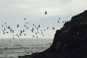 Glaucous-Winged Gulls and Pelagic Cormorants Take Flight from the Rocky Shore of the Inian Islands by Jonathan Kingston