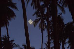 Moonrise in the Kapuaiwa Coconut Grove, Molokai, Hawaii by Jonathan Kingston
