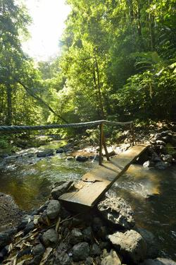 Narrow Wooden Bridge Crosses the Pargo River in the Rainforest of Corcovado National Park by Jonathan Kingston