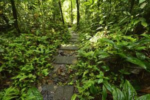 Research Trail Through the Tropical Forest of Barro Colorado Island, Panama by Jonathan Kingston