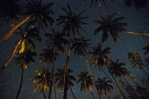 Starry Night in the Kapuaiwa Coconut Grove, Molokai by Jonathan Kingston