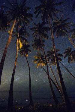 Starry Night in the Kapuaiwa Coconut Grove by Jonathan Kingston