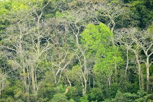 The Dense Tropical Jungle of Barro Colorado Island by Jonathan Kingston