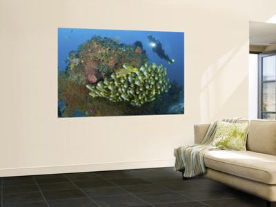 Diver and Schooling Sweetlip Fish Next To Reef, Raja Ampat, Papua, Indonesia by Jones-Shimlock