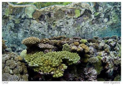 Reef Crest Reflection by Jones-Shimlock