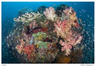 Reef Scenic 2 by Jones-Shimlock