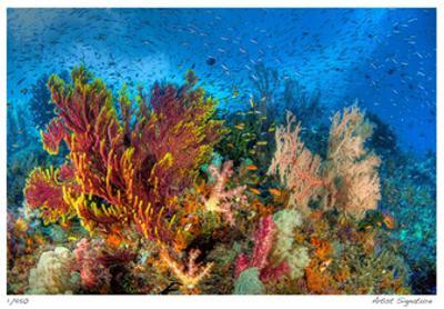 Reef Scenic 3 by Jones-Shimlock