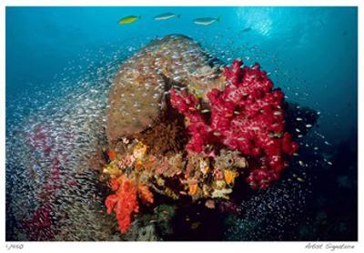 Reef Scenic 5 by Jones-Shimlock