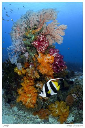 Reef Scenic 7 by Jones-Shimlock