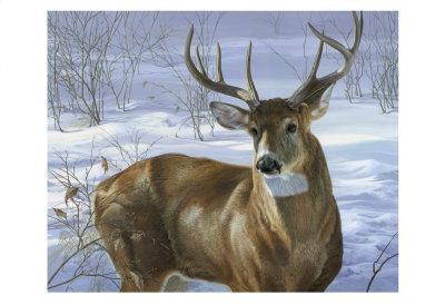 Gray Wolf by Joni Johnson-Godsy 14x11 Poster ART PRINT Uninterrupted Stare