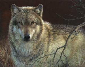 Uninterrupted Stare - Gray Wolf by Joni Johnson-godsy