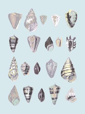 Graphic Seashells I by Joni Whyte