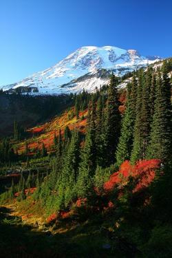 Mt Rainier Fall Color by Jonkman Photography