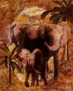 Jungle Elephants by Jonnie Chardonn