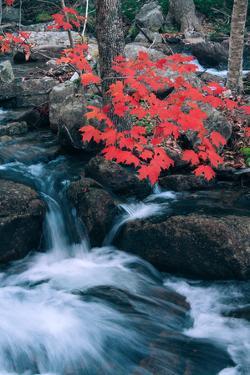 Jordan Stream in Autumn I, Maine Coast