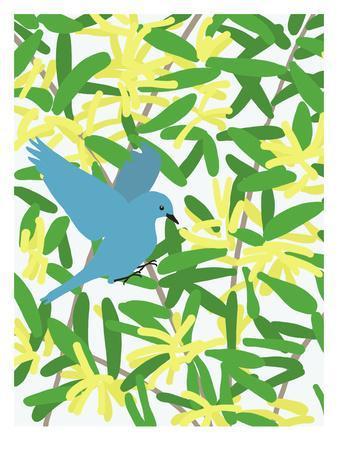Acacia And Mountain Bluebird