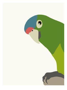 Parrot by Jorey Hurley