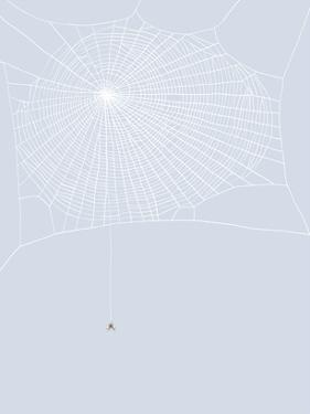 Spider And Web by Jorey Hurley