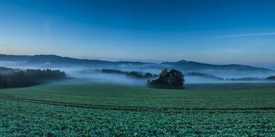 Morning Fog over a Field