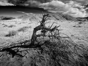 Dead Tree - A Boy Throwing Sand in the Beach, Playing by Jorge Fajl