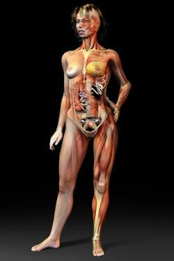 Female Body, Artwork by Jose Antonio