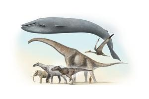 Largest Animals Size Comparison by Jose Antonio