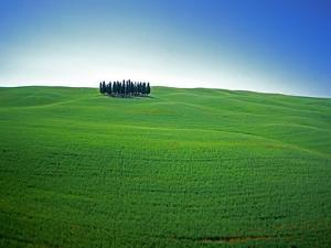 Coppice of Trees on Green Fields in Tuscany by José Fuste Raga