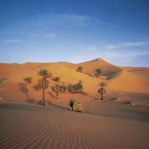 Palm Trees and Sand Dunes by José Fuste Raga