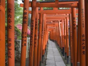 Red Arches Along Path to Nezu Shrine by José Fuste Raga