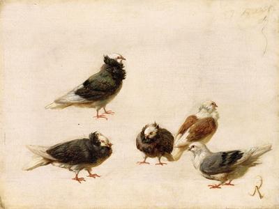 Pigeons, 1888