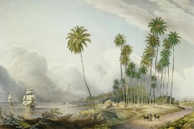 Cocoa Nut Walk on the Coast, Near Runaway Bay, Plate 15 from 'West Indian Scenery: Illustrations…