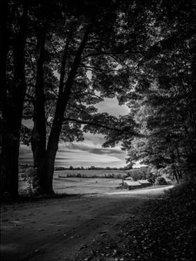 Jenne Farm Tree Tunnel by Joseph Rowland