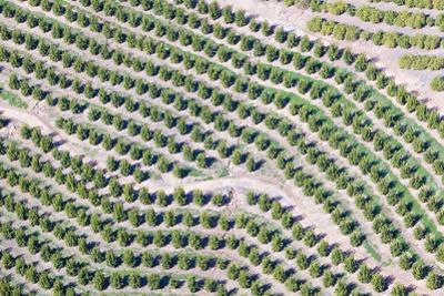 Aerial View of Orange Grove in Ventura County, Ojai, California by Joseph Sohm