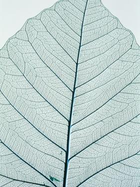 Leaf vein by Josh Westrich