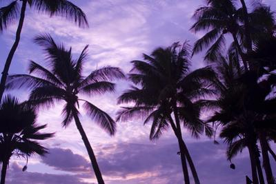 Silhouetted Palm Trees Against a Purple Sky by Joshua Howard