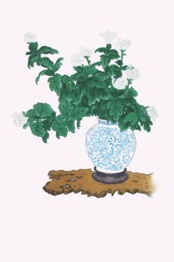 Shiragiku (White Chrysanthemum) In a Blue And White Tsubo by Josiah Conder