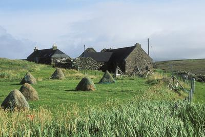 Traditional Farm In The Shetland Isles With Hay Stooks In A Field, Scotland, UK