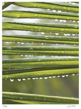 After the Rain I by Joy Doherty